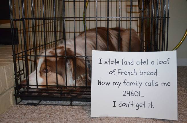 dog in kennel with sign